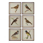 Uttermost Spring Soldiers Bird Prints  6個組