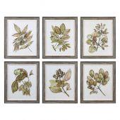Uttermost Seedlings Framed Prints  6個組