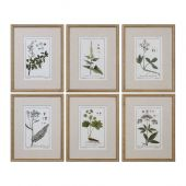 Uttermost Green Floral Botanical Study Prints  6個組